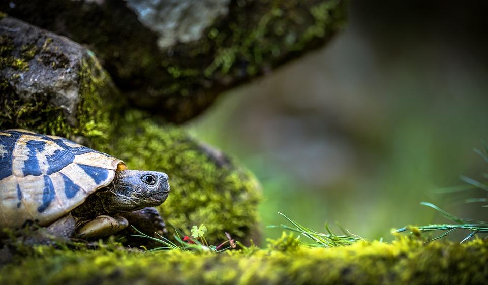 Prendre soin de votre tortue